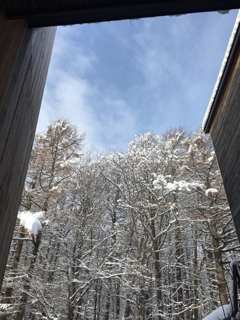 冬の訪れ2